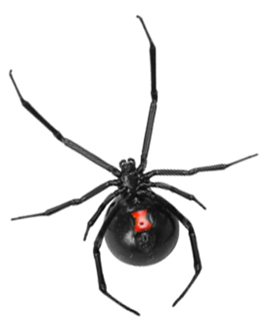 Their child was bitten by a black widow spider. Here's what they want other  parents to know. » Albuquerque Journal