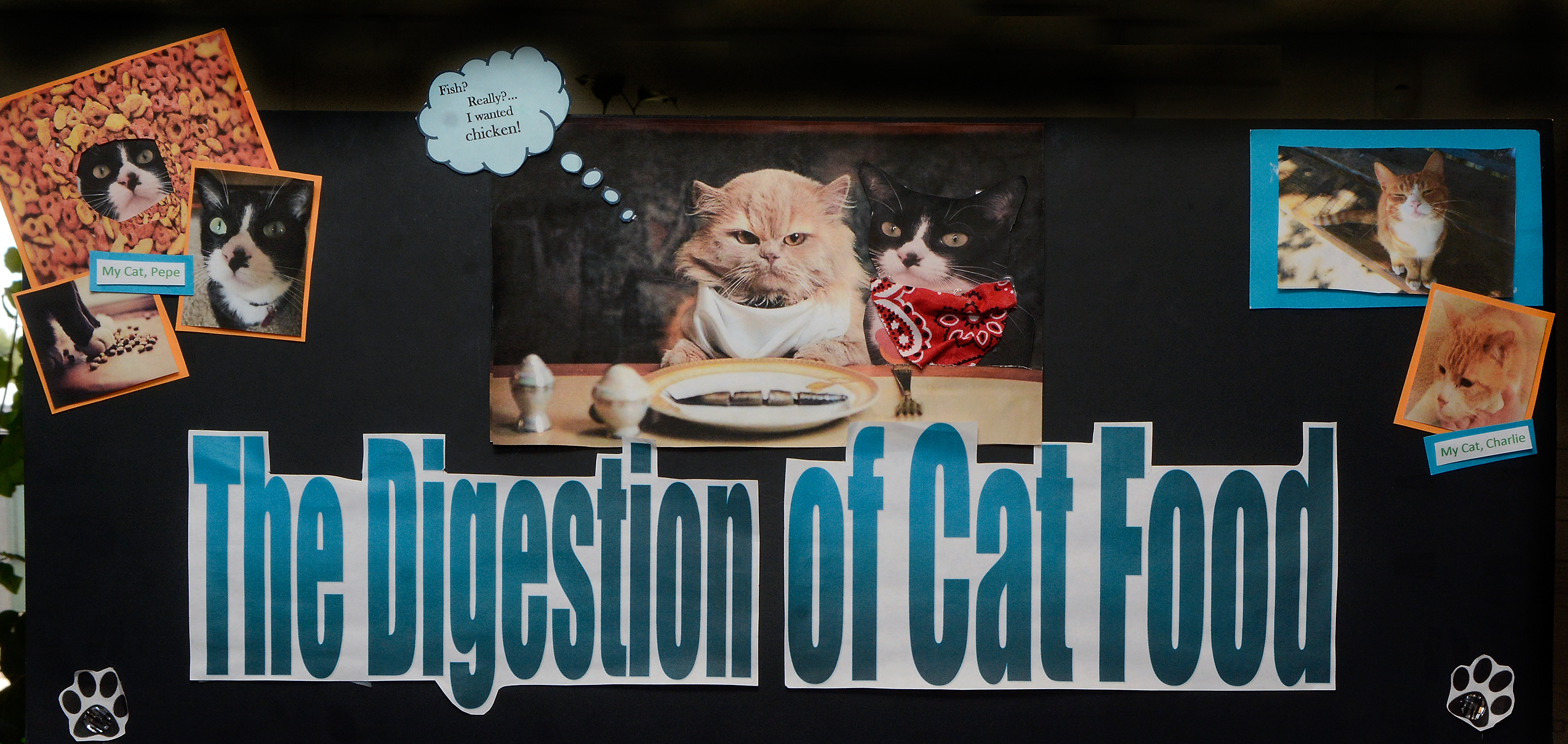 Cats and space the ticket for girls in science fair