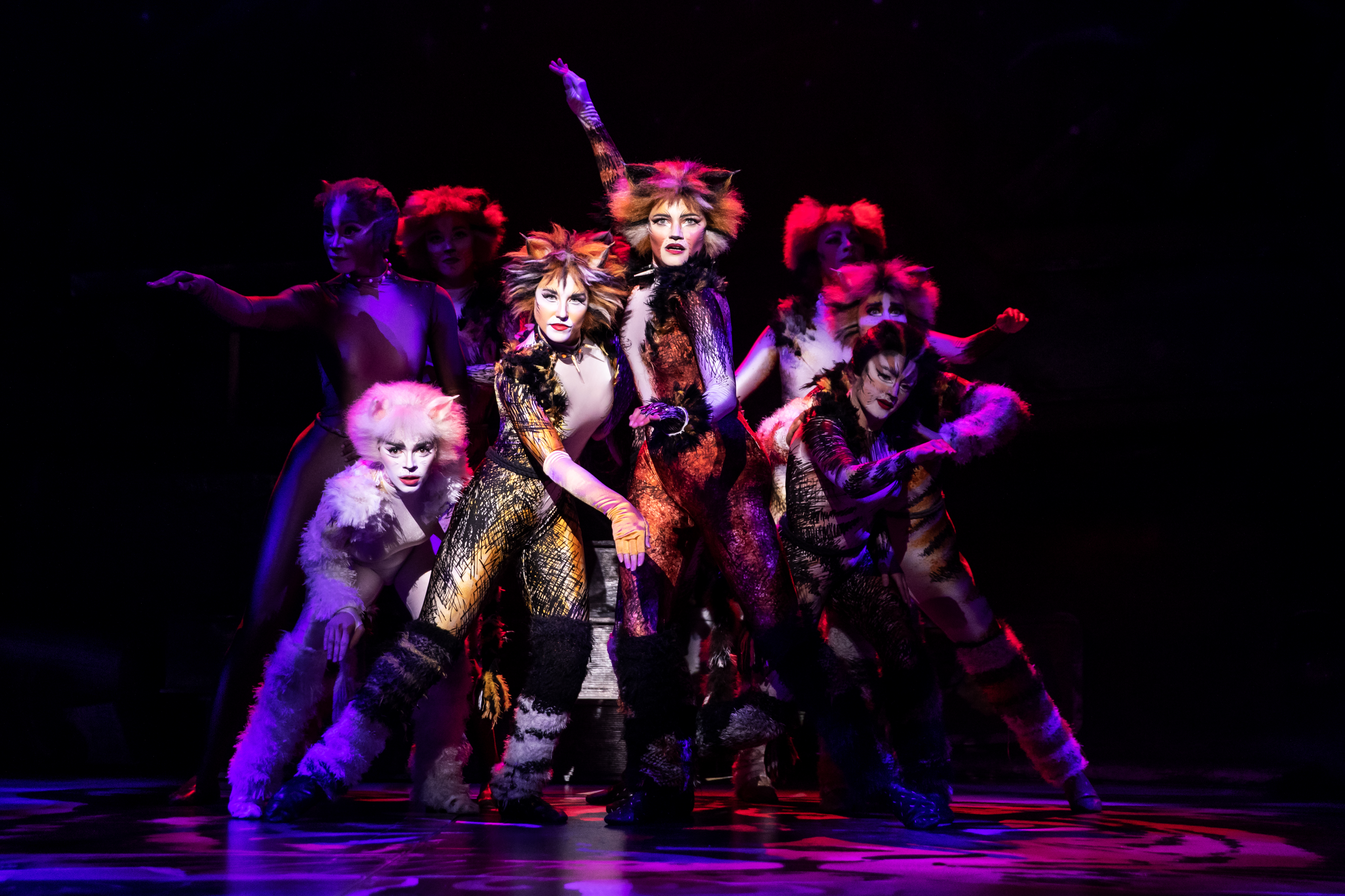 Cats' shows its strength on stage » Albuquerque Journal