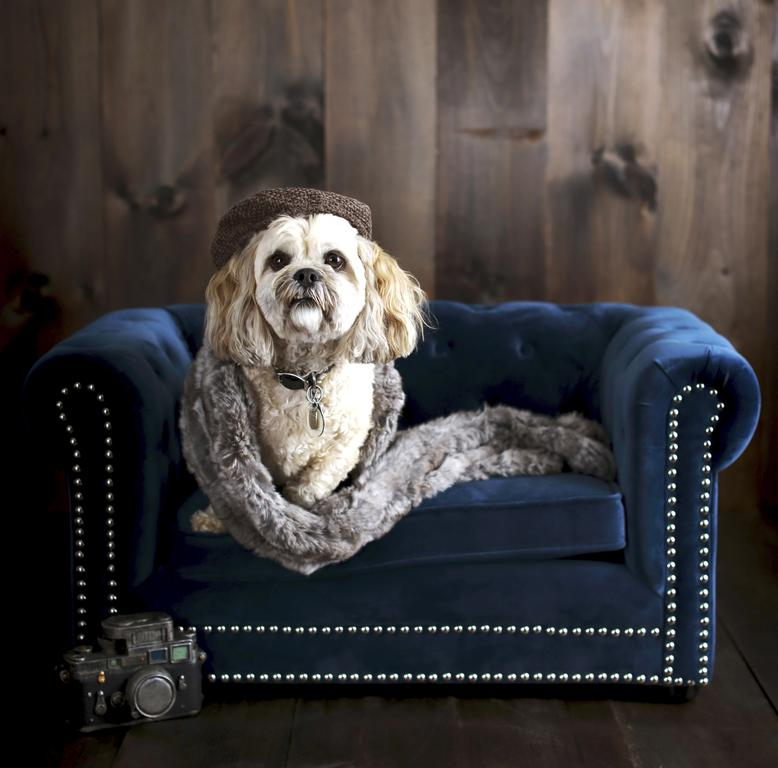 Magnificent The Latest In Pet Furniture Pieces That Fit A Homes Decor Dailytribune Chair Design For Home Dailytribuneorg