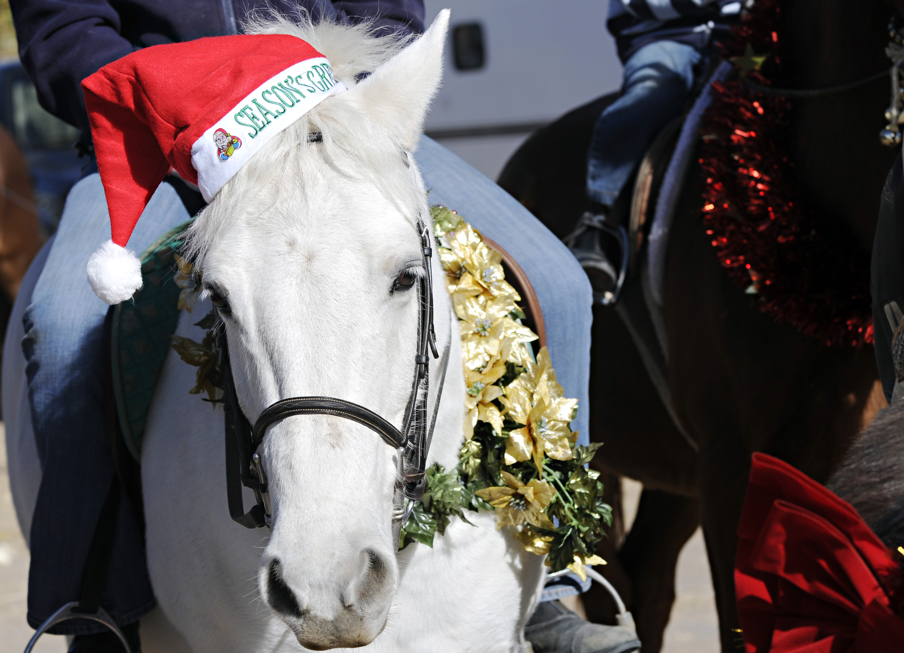 Abq Nm Free Christmas Toys 2020 Christmas de los Caballos Parade returns » Albuquerque Journal