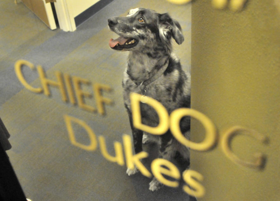 Albuquerque's chief dog, Dukes, had his name painted on Mayor Martin Chávez's office window beneath the names of other top officials. (Greg Sorber/Albuquerque Journal)