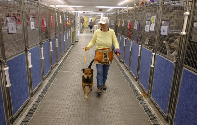 City looks to 'Empty the Shelter'